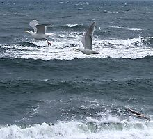 Gulls Over Waves by George Cousins