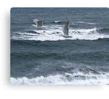 Gulls Over Waves Canvas Print