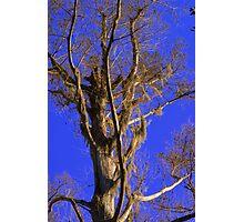 Swamp Tree Photographic Print