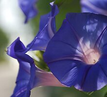Soft Purple by Catherine Davis