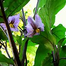 Eggplant Blossoms by scenebyawoman