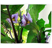 Eggplant Blossoms Poster