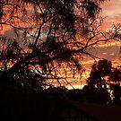 Beautiful Sunset by joycee