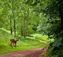 Summer Buck by Joe Jennelle