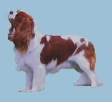 Blenheim Cavalier King Charles Spaniel by Jenny Brice