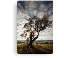 Lone tree on the road to Tidbinbilla (1) in ACT/Australia Canvas Print