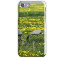 Birds - Kruger iPhone Case/Skin
