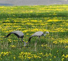 Birds - Kruger by steve nicholson
