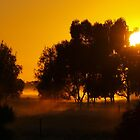 Misty Summer Sunrise by Julie Sleeman
