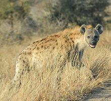 Hyena by steve nicholson