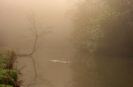 Two Ducks Make Their Way Up A Misty Calm River  by miradorpictures