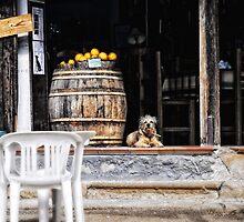 Tavern dog with oranges by Silvia Ganora