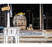 Tavern dog with oranges Photographic Print