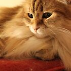 Sunny feline thoughts by Marie-Eve Boisclair