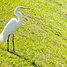 Egret on an embankment by  B. Randi Bailey