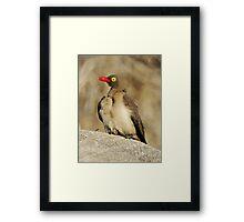 Red Billed Oxpecker Framed Print