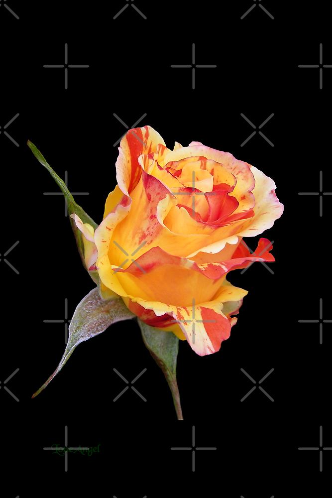 Rosebud on Ebony by LoneAngel