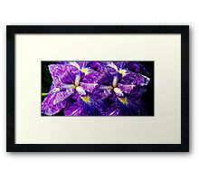 Purple Irises ©  Framed Print