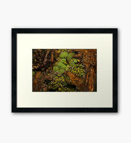 Raw Life Framed Print