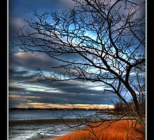 Tree at Sunset by Brian  Seidenfrau