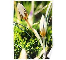 pure sunlight on the flowers Poster