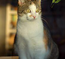 Window Cat by vbk70
