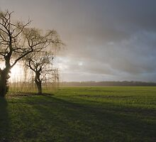 Weeping willow sunset 2 by Yves Roumazeilles