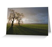 Weeping willow sunset 2 Greeting Card