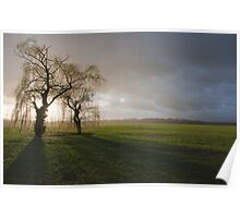 Weeping willow sunset 2 Poster