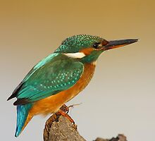 Kingfisher by Aaron Gee