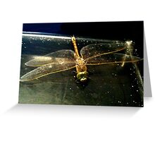 iPhone Dragonfly 3 Greeting Card