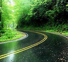 The Road Less Traveled by Steve Mezardjian