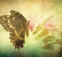 Butterfly Shine by DottieDees