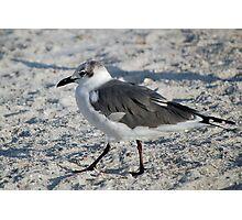 Hokey Pokey on the beach Photographic Print