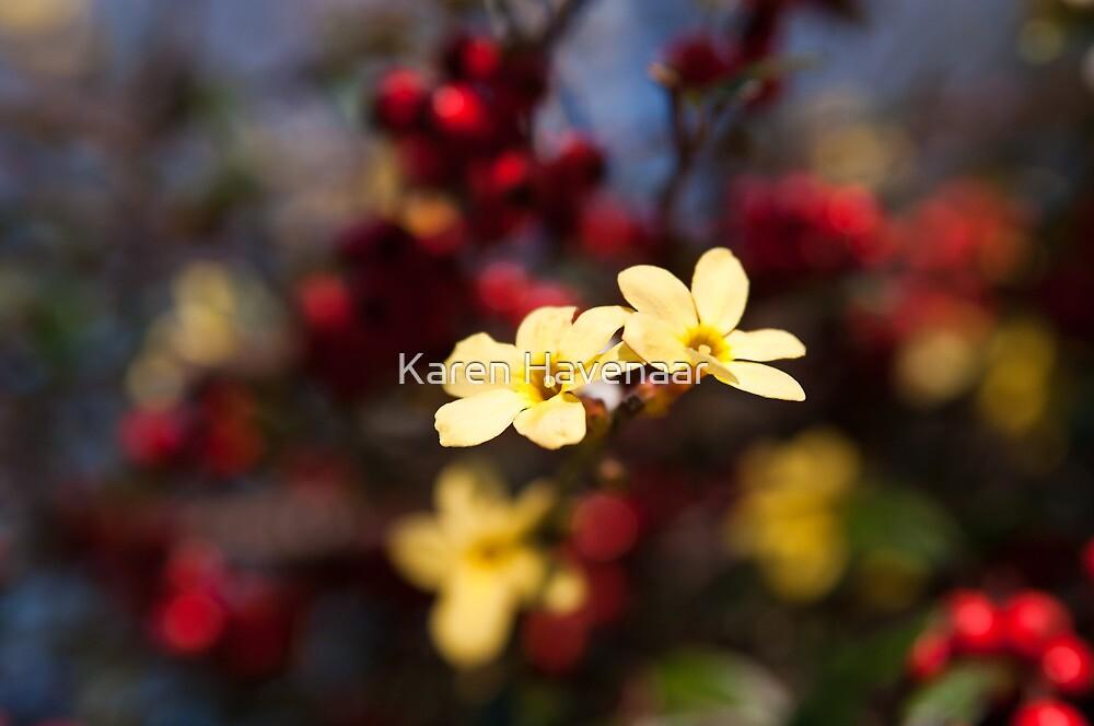Jasminum Nudiflorum by Karen Havenaar