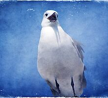 The Seagull  by DottieDees