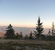 Browning Knob  by sweetrose