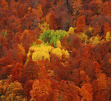 Autumn colors by FOTIS MAVROUDAKIS