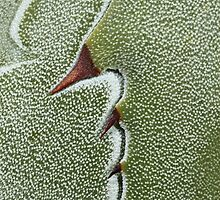 Agave abstract by Etwin