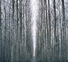 The path by FOTIS MAVROUDAKIS
