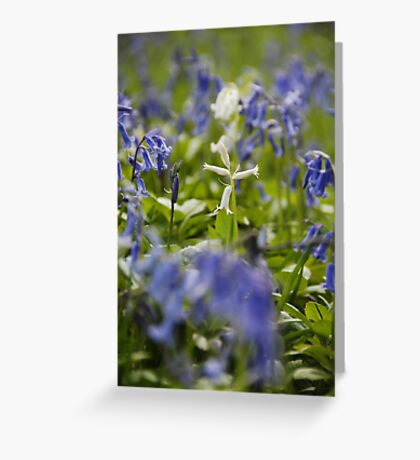 White bluebell flowers in bluebell wood, England Greeting Card