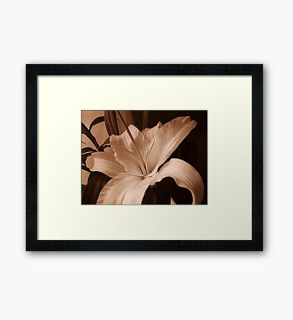Lily In Sepia Framed Print