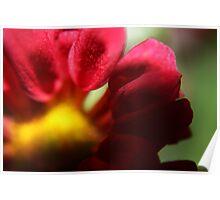 Petals Pink Poster
