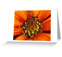 Orange Flower Up Close Greeting Card