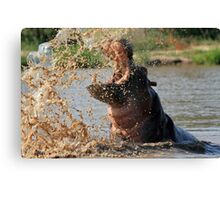 Hippo, South Africa Canvas Print