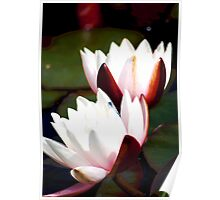 """""""Together"""" - Water Lily Poster"""
