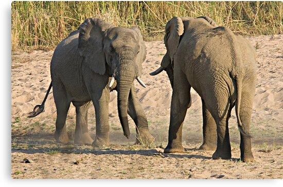Elephant Disagreement by Michael  Moss