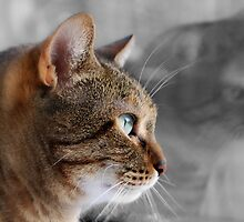 Tabby Reflection by Karen Martin