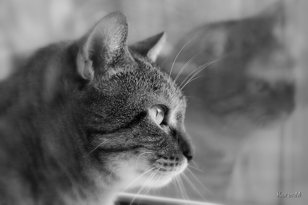 Tabby Reflections by KarenM