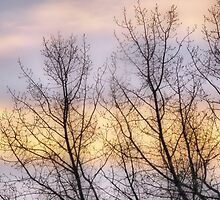 Soft Winter Sunset by kenspics